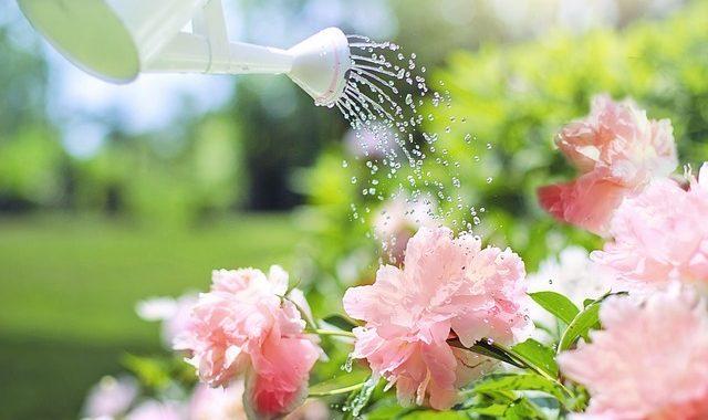 Watering 2389940 640