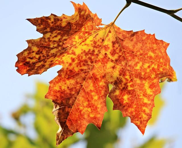 Autumn 1638473 640