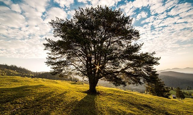 Tree 338211 640