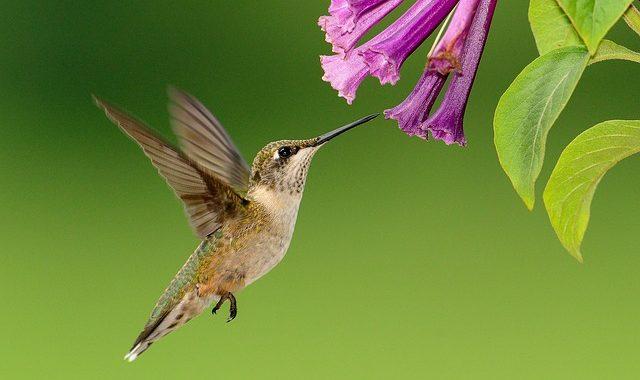 Hummingbird 1056383 640